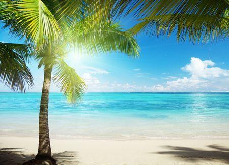 La mer des Caraïbes et noix de coco pulms Banque d'images