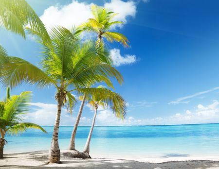 Caribbean sea and coconut palms Stock Photo - 6735450