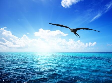 gaviota: Albatros y mar Caribe