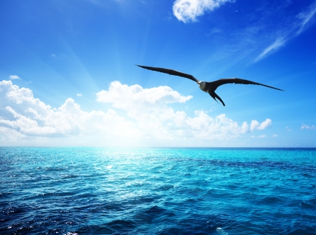 serenity: albatross and caribbean sea