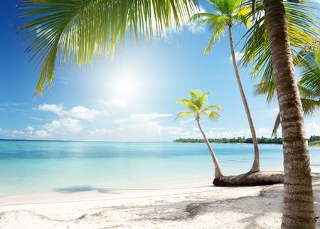 Caribbean sea and coconut palms Stock Photo - 6777679