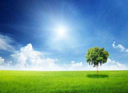 field of grass and tree Stock Photo - 6777714