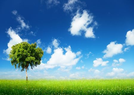 field of grass and tree photo
