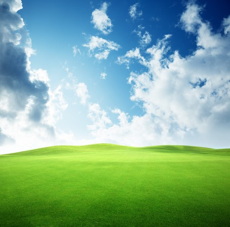 field of grass and perfect sky Stock Photo - 6976645