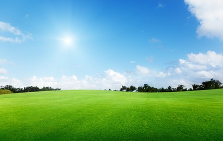 green field and trees Stock Photo - 7102269