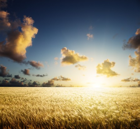 field of barley and sunset Stock Photo - 7682060