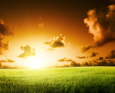 field of barley and sunset Stock Photo - 7682052