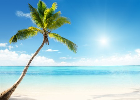 Caribbean sea and coconut palm Stock Photo - 7784793