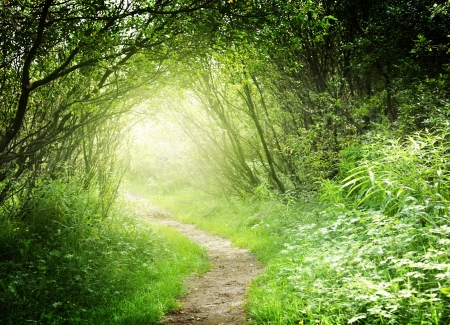 fog forest: way in deep forest Stock Photo
