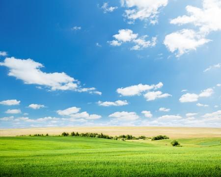 oats: oat field and sunny sky