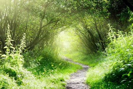 way in deep forest Stock Photo - 8084766