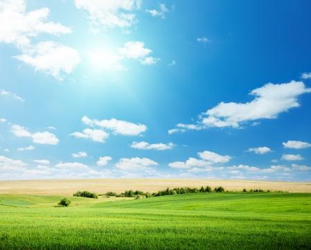 avena: campo de avena y cielo soleado