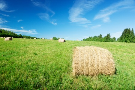 harvested grass in roll and perfect sunny day photo