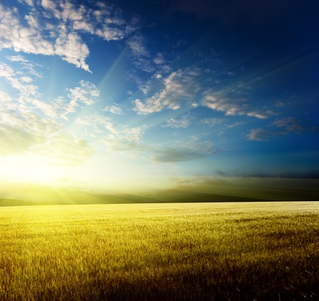 field of barley and sunset Stock Photo - 8240988