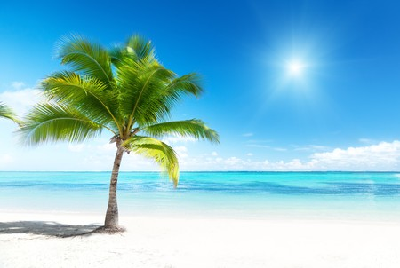 Palm et plage Banque d'images - 8240977