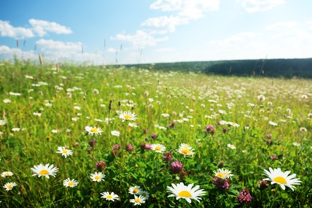 field of wild flowers Stock Photo - 8240958
