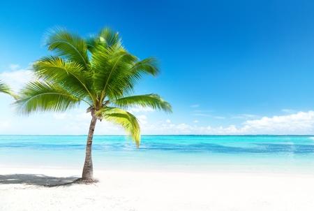 palma e spiaggia Archivio Fotografico