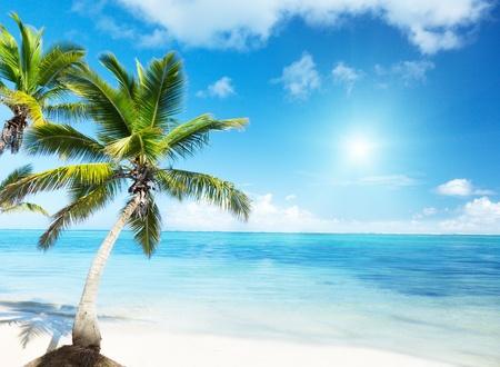 Palm e spiaggia Archivio Fotografico - 8347183