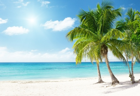 Caribbean sea and coconut palms photo
