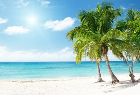 playas tropicales: Mar Caribe y palmeras de coco Foto de archivo