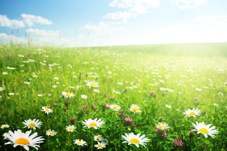 field of wild flowers Stock Photo - 8347177