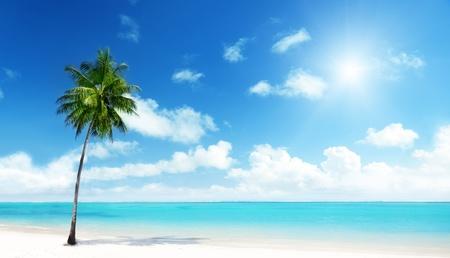 noix de coco: Palm et plage