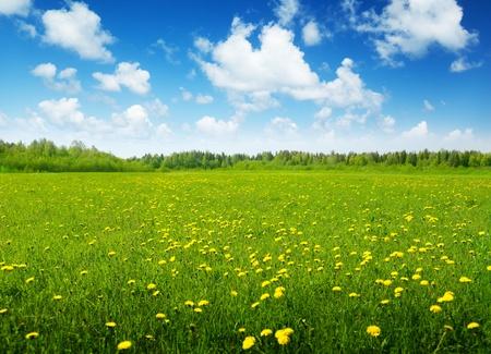 春の花と晴れた日のフィールド