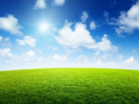 green field and sunny day Stock Photo - 8432049