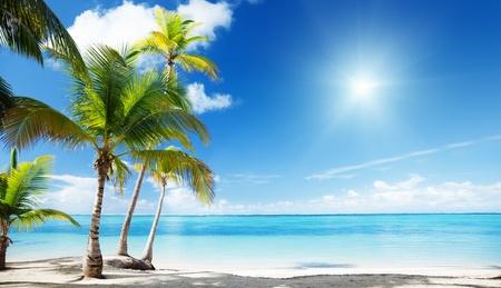 blue lagoon: Mare dei Caraibi e palme da cocco Archivio Fotografico