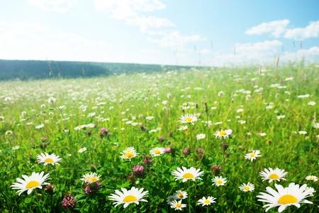 field of wild flowers Stock Photo - 8432068