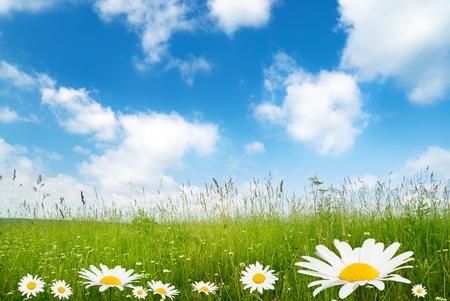Champ de fleurs de daisy Banque d'images - 8432045