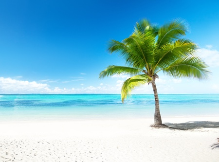 Palm und Strand Standard-Bild