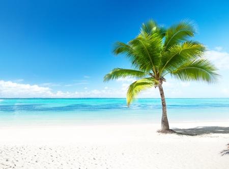 Palm y playa Foto de archivo - 8537765