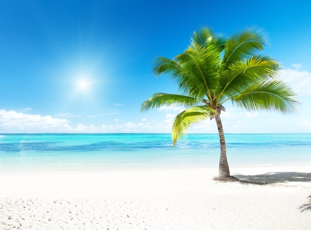 palm and beach Stock Photo - 8537764