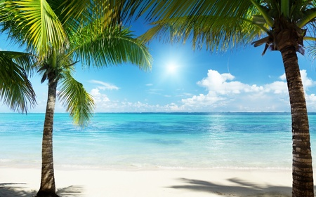 caribbean island: palms and beach