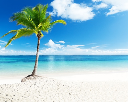 palm and beach Stock Photo - 8537753