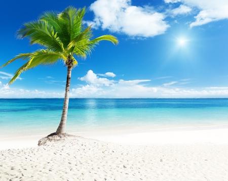 feuille arbre: Palm et plage