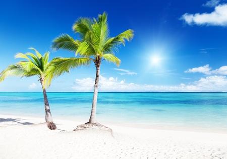 palms and beach Stock Photo - 8537755