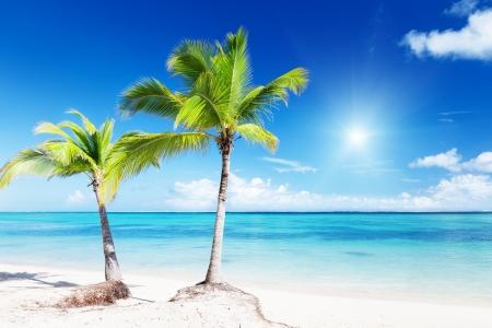 palms and beach Stock Photo - 8537762