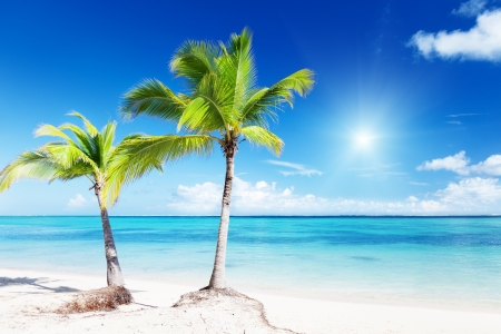 palms and beach Stock Photo - 8537762