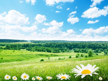 field of daisy flowers Stock Photo - 8537761