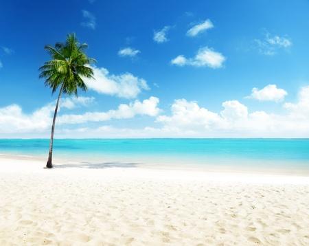 palm and beach photo