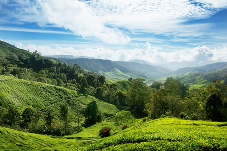 inspirerend: Thee plantage Cameron highlands, Maleisië