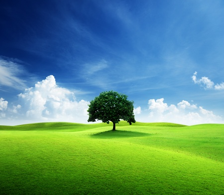 one tree and perfect grass field Stock Photo - 9429072