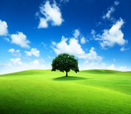 one tree and perfect grass field Stock Photo - 9430523