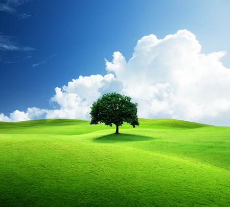 one tree and perfect grass field Stock Photo - 9430522