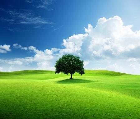 1 本の木と完璧な芝生のフィールド 写真素材