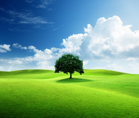 one tree and perfect grass field photo