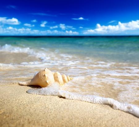 Seashell am Strand (shallow DOF) Standard-Bild