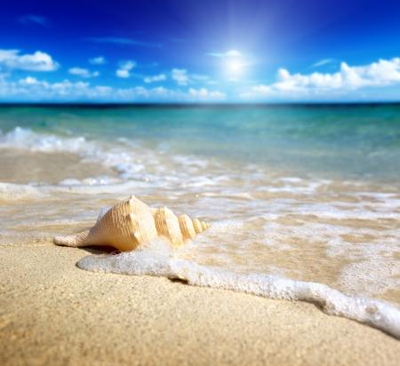 해변에서 조개 (얕은 DOF)